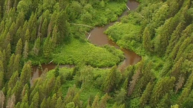 Mondi Group and the International Union of Forest Research Organizations (IUFRO) have signed a three-year partnership to identify science-based responses to climate-related threats to forests