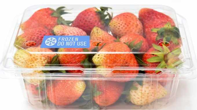 If the temperature of the package drops at or below 32 degrees F (zero degrees C), a colored symbol appears on the exterior of the package to quickly notify the supply chain that product has been damaged