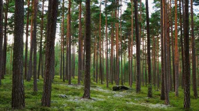 Stora Enso to acquire forest assets in Bergvik Skog