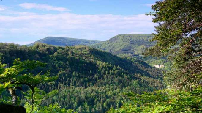 Stora Enso and FSC enter strategic partnership to promote sustainable forestry